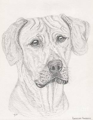 Drawing - Rhodesian Ridgeback by Yvonne Johnstone