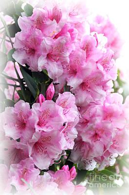 Photograph - Rhodie Blossom Cascade by Sarah Schroder