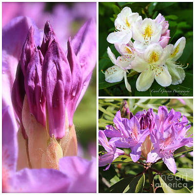 Rhododendron Collage Art Print by Carol Groenen