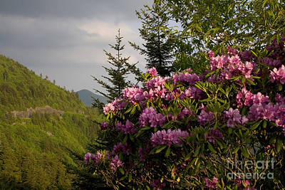 Rhododendron 1 Art Print by Jonathan Welch