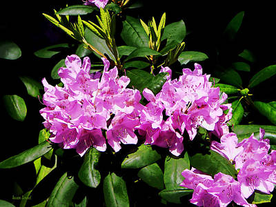 Photograph - Rhododendron Closeup by Susan Savad