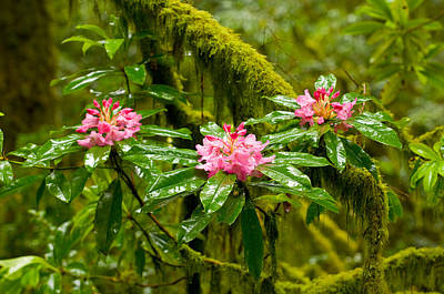 Close Focus Nature Scene Photograph - Rhododendron Flowers In A Forest by Panoramic Images
