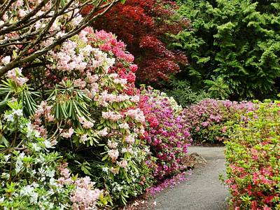 Photograph - Rhododendron Garden by VLee Watson