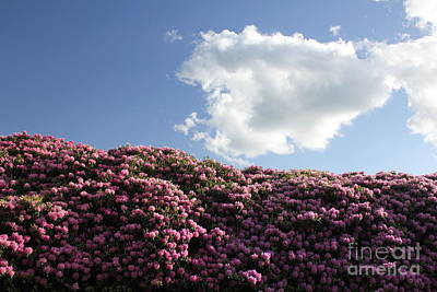 Rhododendron Art Print