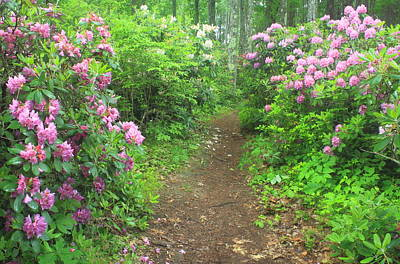 Photograph - Rhododendron Path by John Burk