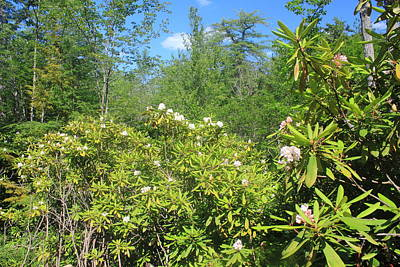 Photograph - Rhododendron State Park July Blooms by John Burk