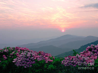 Photograph - Rhododendron Sunrise by Annlynn Ward