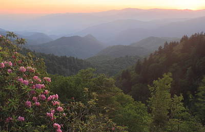 Photograph - Rhododendron Sunset Wooleyback Overlook Blue Ridge Parkway by John Burk