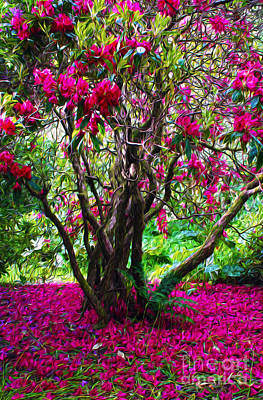 Colourfull Photograph - Rhododendron Tree by JM Braat Photography