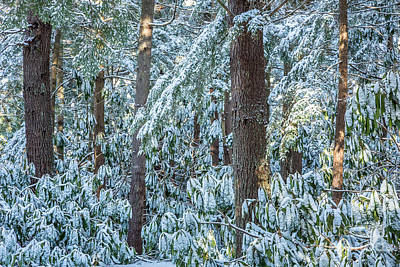 Photograph - Rhododendron Woods In Snow by Susan Cole Kelly