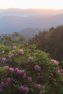 Photograph - Rhododendrons And Smoky Mountains In Evening Light by John Burk