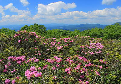 Photograph - Rhododendrons Craggy Gardens Blue Ridge Parkway by John Burk