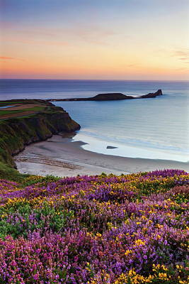 Heather Wall Art - Photograph - Rhossili Bay, Worms End, Gower by Billy Stock / Robertharding