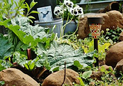 Photograph - Rhubarb In My Rock Garden by VLee Watson