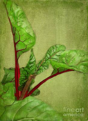 Rhubarb Art Print by Judi Bagwell