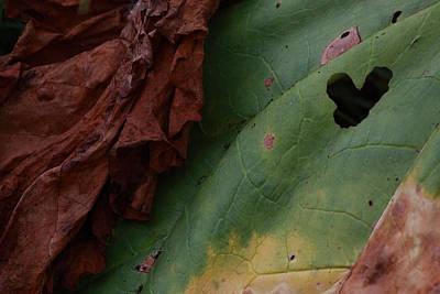 Ballerina Art - Rhubarb leaf texture by Ulrich Kunst And Bettina Scheidulin