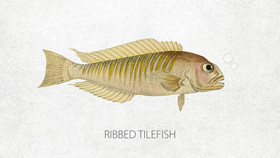 Fish Species Digital Art - Ribbed Tilefish by Aged Pixel