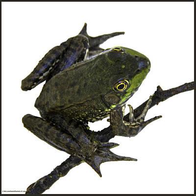 Toad Photograph - Ribbeting Frog In A Bucket by LeeAnn McLaneGoetz McLaneGoetzStudioLLCcom