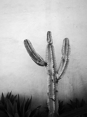 Photograph - Ribbing by David Pantuso