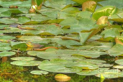 Photograph - Ribbit Camouflage by Deborah Smolinske