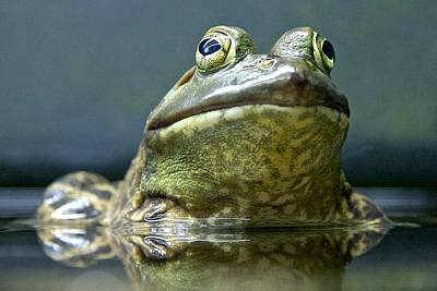 Art Print featuring the photograph Ribbit  by Scott Holmes