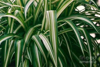 Ribbon Grass Art Print