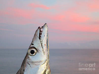Photograph - Ribbonfish At Sunrise by Patricia Januszkiewicz