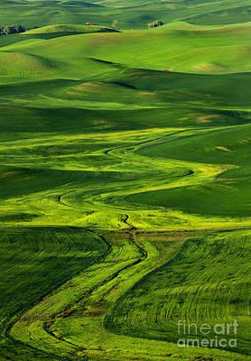 Ribbons Of Green Art Print