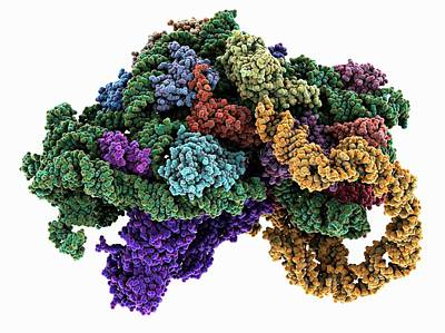 Ribosome Bound To Mrna Art Print