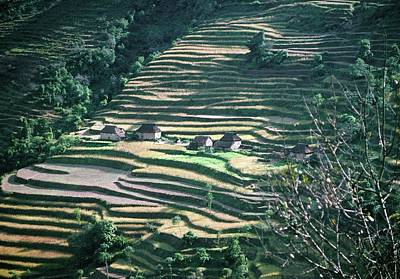 Agricultural Industry Wall Art - Photograph - Rice And Millet Terraces by Archie Young/science Photo Library