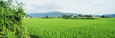 Japan Village Photograph - Rice Field At Sunrise, Kyushu, Japan by Panoramic Images