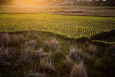 Livelihood Photograph - Rice Field In Madagascar by Diana Mrazikova/ Vwpics