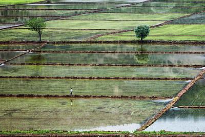Rice Wall Art - Photograph - Rice Field On Man by ??irin Akt??rk