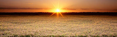 Rice Field, Sacramento Valley Art Print by Panoramic Images