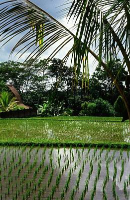 Photograph - Rice Fields Bali by Juergen Weiss