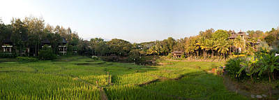 Rice Fields In Front Of Villas, Four Print by Panoramic Images