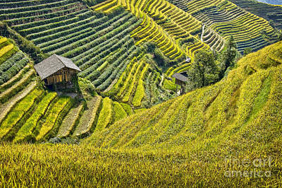 Rice Fields Terraces Print by Delphimages Photo Creations