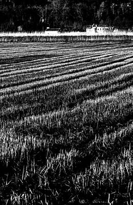 New Years Royalty Free Images - Rice paddies Royalty-Free Image by Edgar Laureano