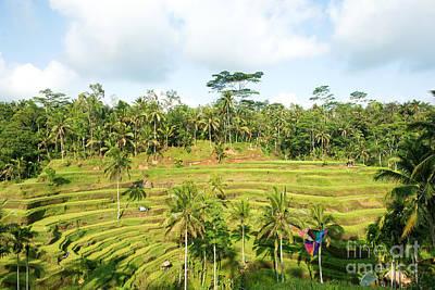 Photograph - Rice Paddy Field Plantation by Yew Kwang