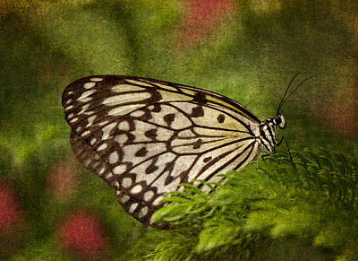 Photograph - Rice Paper Butterfly 2 by Joann Vitali
