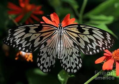 Rice Paper Photograph - Rice Paper Butterfly Elegance by Sabrina L Ryan