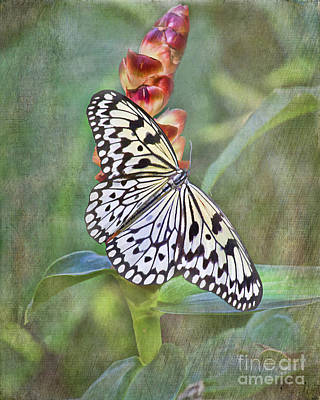 On Paper Photograph - Rice Paper Butterfly - Free Spirit by TN Fairey