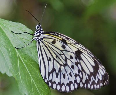 Bath Time - Rice Paper Butterfly by Maj Seda