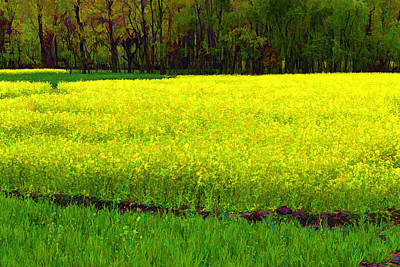 Flower Photograph - Rich Yellow Mustard Fields And Trees In Kashmir by Ashish Agarwal