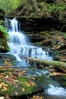 Photograph - Ricketts Glen Hidden Waterfall by Crystal Wightman