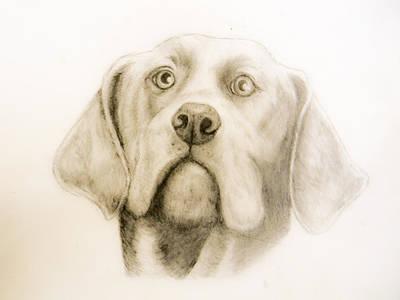 Drawing - Ricky The Faithful by Suzie Hanscom