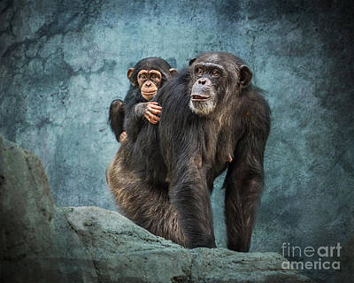 Chimpanzee Photograph - Ride Along by Jamie Pham