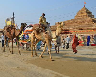 Camel Photograph - Riding A Camel At The Kumbhla Mela - Allahabad India by Kim Bemis