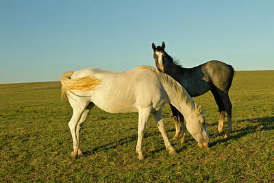 Grazing Horse Photograph - Riding Horses On Ranch Near Gonzales by Larry Ditto