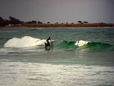 Photograph - Riding The Waves At Asilomar by Joyce Dickens